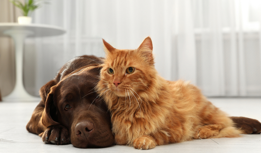 pet hair maintenance tips